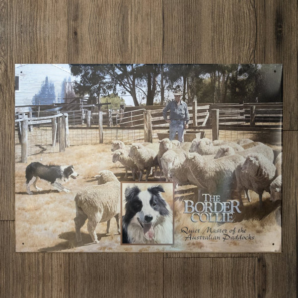 Border Collie Tin Sign