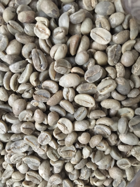 Serrano Lavado, Cumanayagua - New Crop Washed Arabica Green Coffee Beans (1kg)
