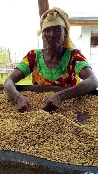 Congo Arabica Washed Bourbon Rebuild Womens Hope Green Coffee Beans (1kg)