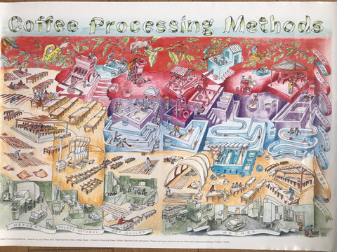 Coffee Processing Methods Poster