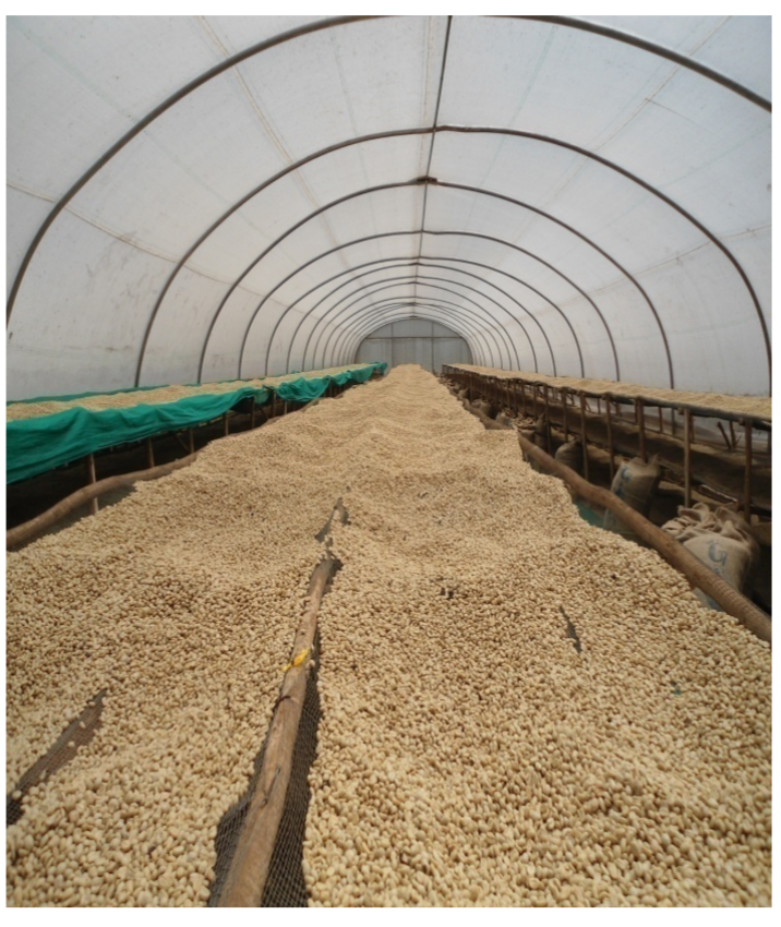 Rwanda GITWE Washed Arabica Green Coffee Beans (1kg)