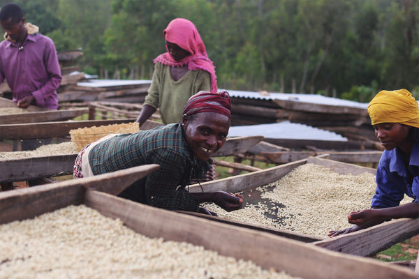 Ethiopia Jimma Birbisa Natural Arabica Green Coffee Beans (1kg)