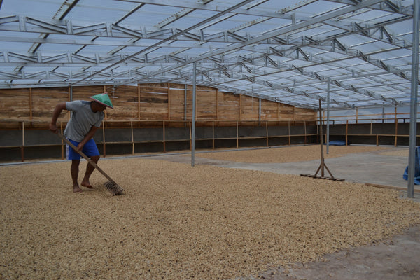 Indonesia Burni Telong Giling Basah Arabica Green Coffee Beans (1kg)