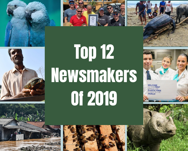 Top 12 Environmental News Of Year 2019