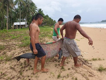 NEWS: Plastic-Eating Dolphin in the Philippines