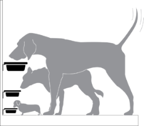 image showing dogs eating at various heights