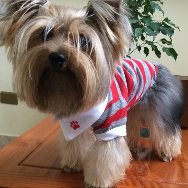 Joey Pull-Over Striped Polo Shirt - Red - Haute Dog Shop