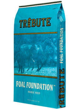 Tribute Foal Foundation 50 Lb.
