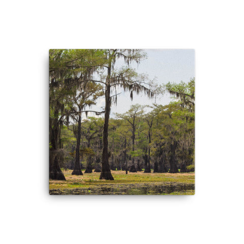 Caddo Lake, Texas Canvas Print