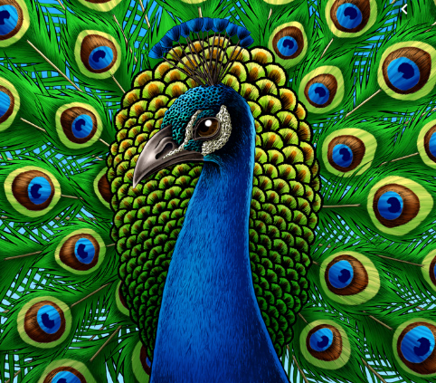 The Symbolic Meaning Of The Peacock