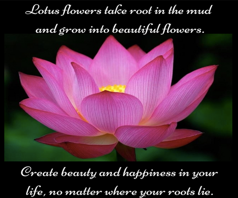 the powerful and beautiful meaning of the lotus flower  red rain, Beautiful flower