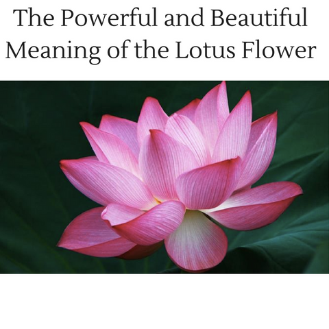 the powerful and beautiful meaning of the lotus flower  red rain, Natural flower