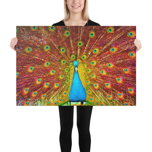 Power Of the Peacock | Vibrant HD Canvas