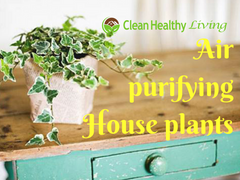 How to Clean Your Air with Air Purifying Houseplants