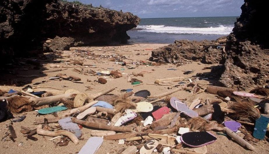 Biodegradable Flip Flops Expected to Take the Market