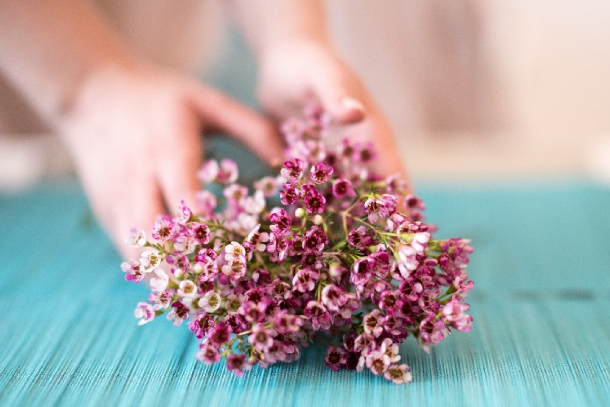 How To Care For Fresh Cut Flowers Flower Care Care Instructions