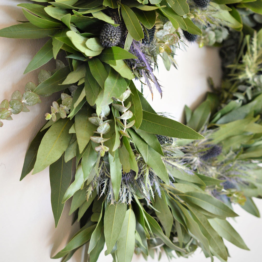 Bay and Thistle Wreath | Club Botanic | Fresh Wreath for the Fall | Fall Wreath for Door | Baby Eucalyptus and Bay Leaf Wreath for Fall | Blue Thistle Wreath for Fall | Echinops Wreath for Fall | Thanksgiving Wreath with Bay Leaf, Baby Eucalyptus and Blue Thistle