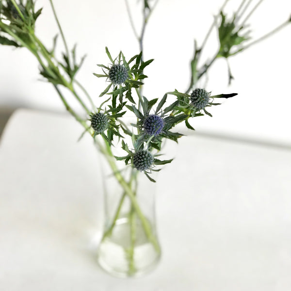 Wholesale Flowers | Blue Thistle | Blue Eryngium Thistle | Sea Holly Flower | Eryngium Blue Hobbit |