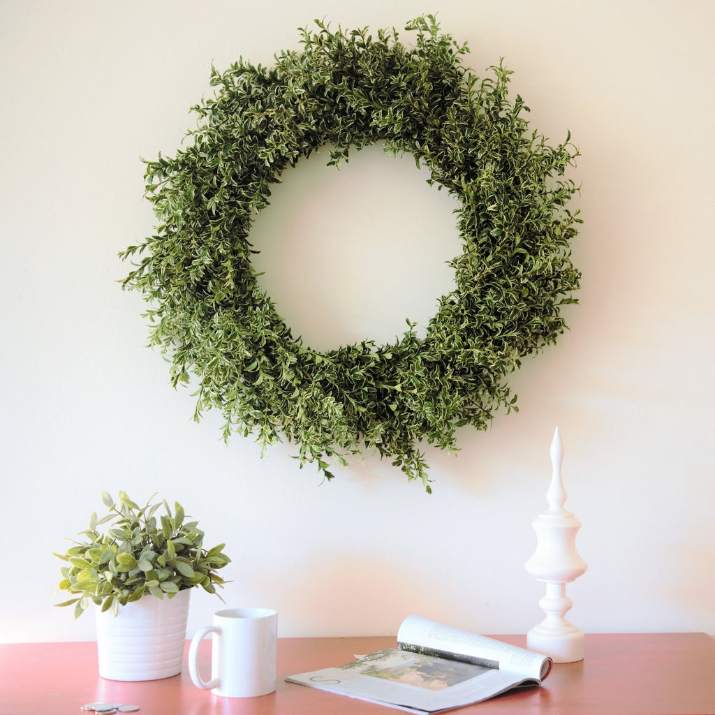 English Boxwood Wreath | Club Botanic | Variegated Boxwood Wreath on white wall above a red chest of drawers | Green and White Wreath