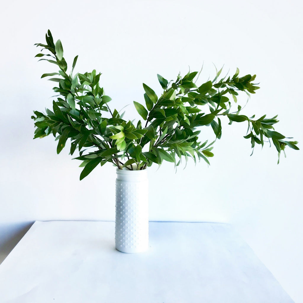 Fresh Bay Leaf Branches | Fresh Bay Leaf Bunch | Bay Branches in White Vase | Fresh Bay Leaf for Sale
