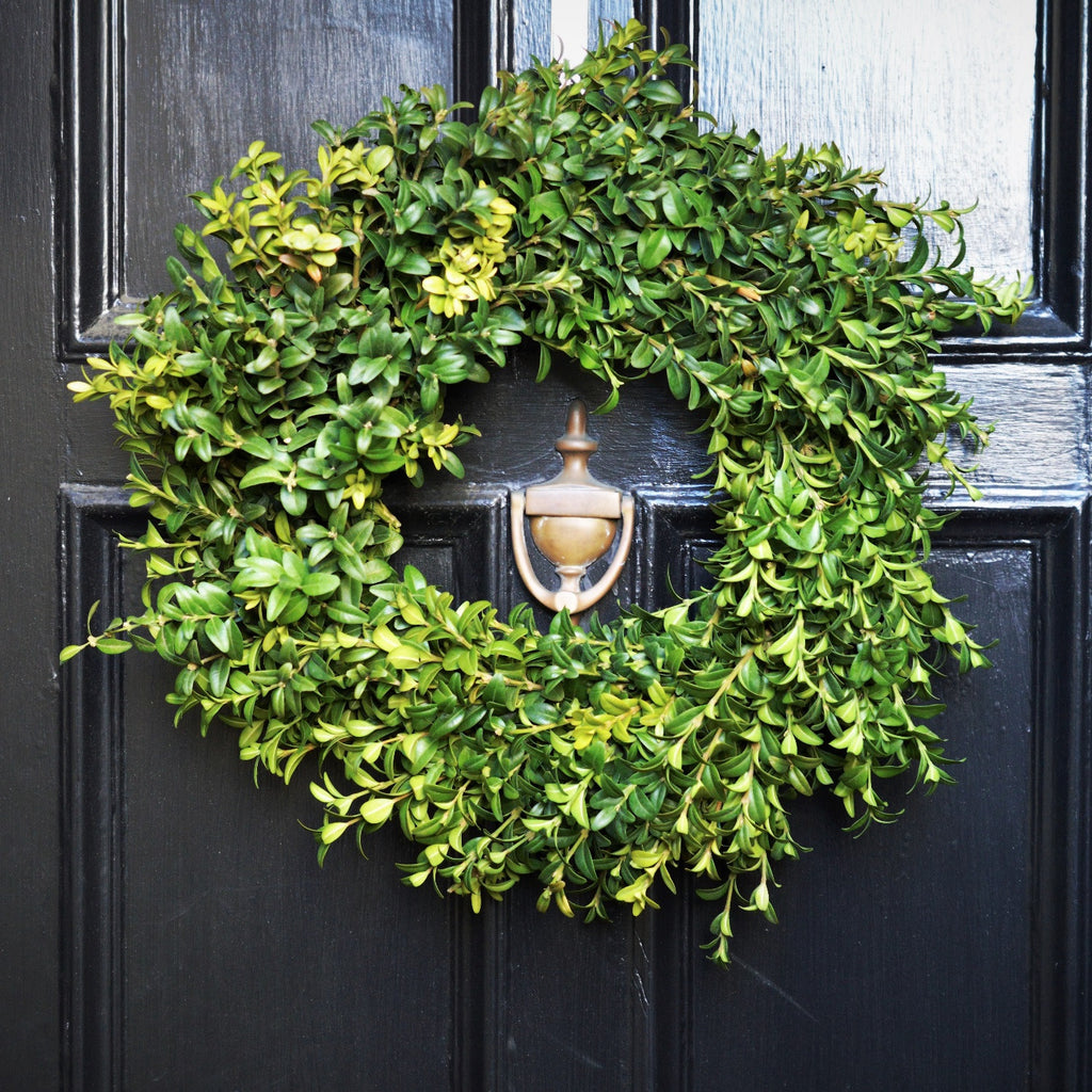 Fresh Boxwood Wreath | Club Botanic | German Boxwood Wreath | Green Boxwood Wreath | Boxwood Wreath for Front Door | Fresh Green Boxwood Wreath on Black Wooden Door