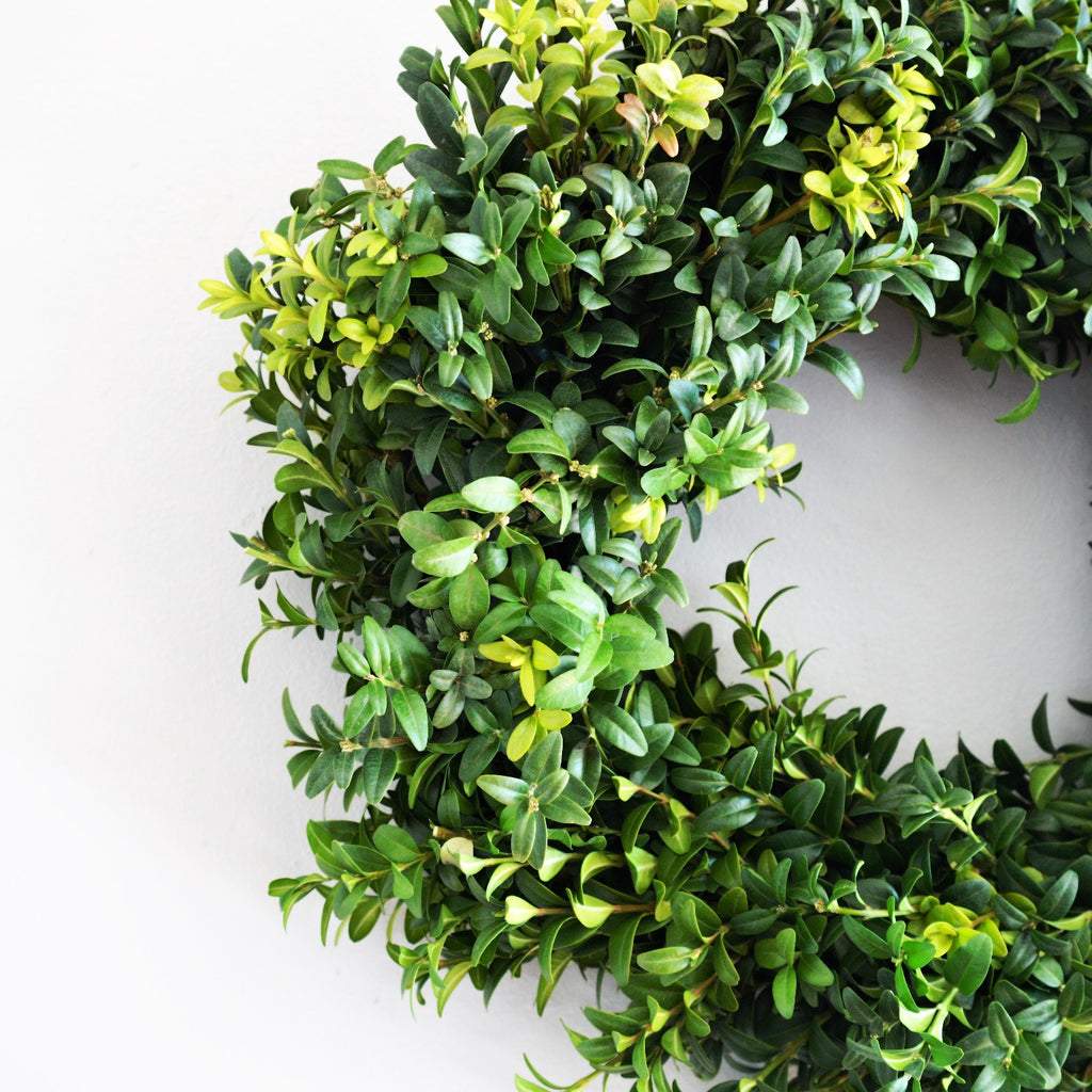 Fresh Boxwood Wreath | Club Botanic | Green German Boxwood Wreath | Fresh Green Wreath Boxwood | Boxwood Green Wreath on white background