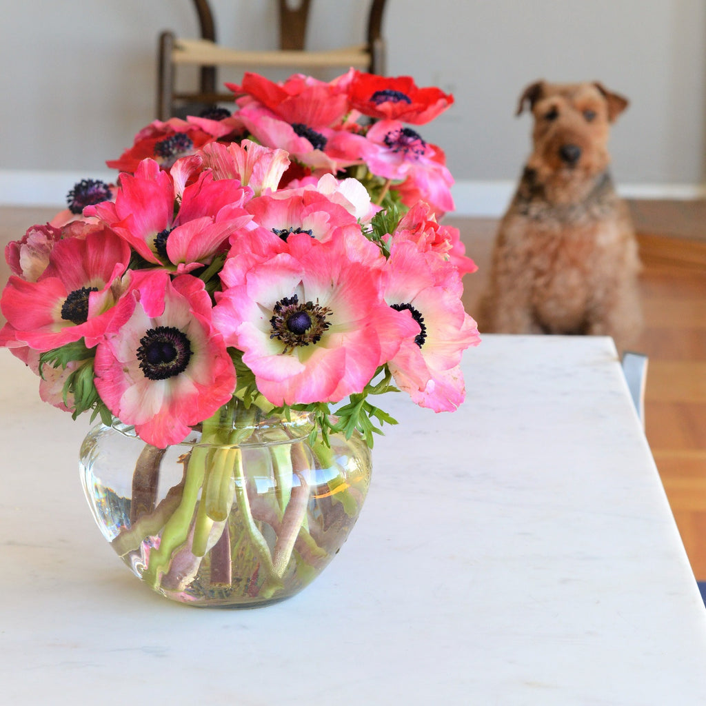 Red and Pink Anemones | Valentine's Day Flowers