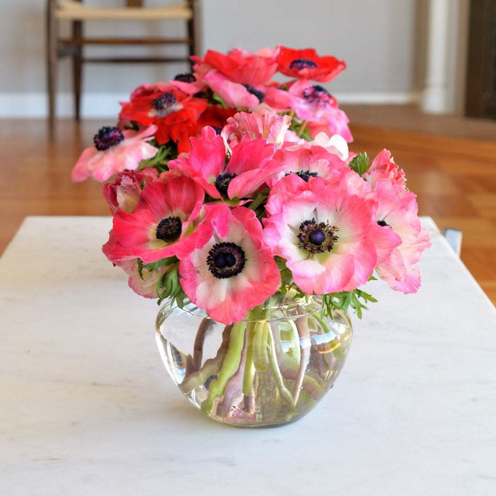Anemones | Red Flowers | Pink Flowers