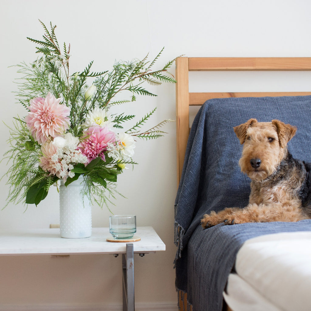 Pink Dahlias | Pink Flowers | Pink Flower Bouquet | Garden Bouquet | White Flower Bouquet | San Francisco Florist | Dog with Flowers | Welsh Terrier
