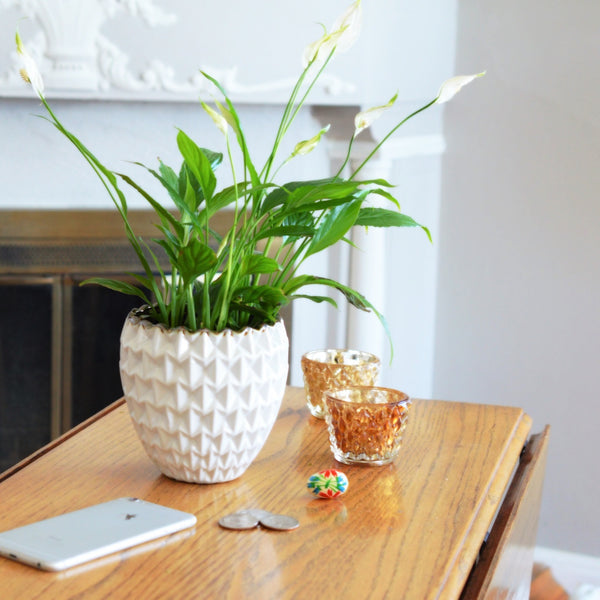 Peace Lily | Get Well Flowers | Sympathy Flowers