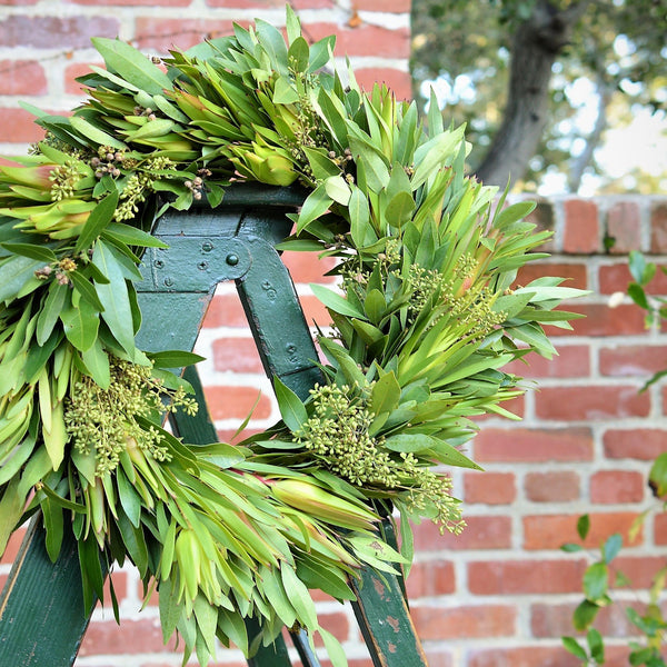 Leucadendron and Bay Wreath | Club Botanic | Leucadendron Wreath for Fall | Bay Leaf Wreath for Fall | Eucalyptus Wreath for Fall