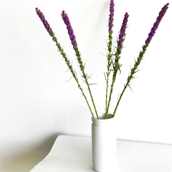 Liatris | Liatris Bunch for Sale | Gayfeather | Liatris Spicata | Bunches of Blazing Star for sale | Club Botanic