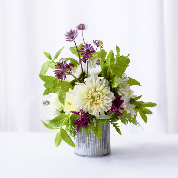 Garden Flowers | White Dahlias | Fresh Mint | Purple Pom Poms| Violet Mums | Welsh Terrier