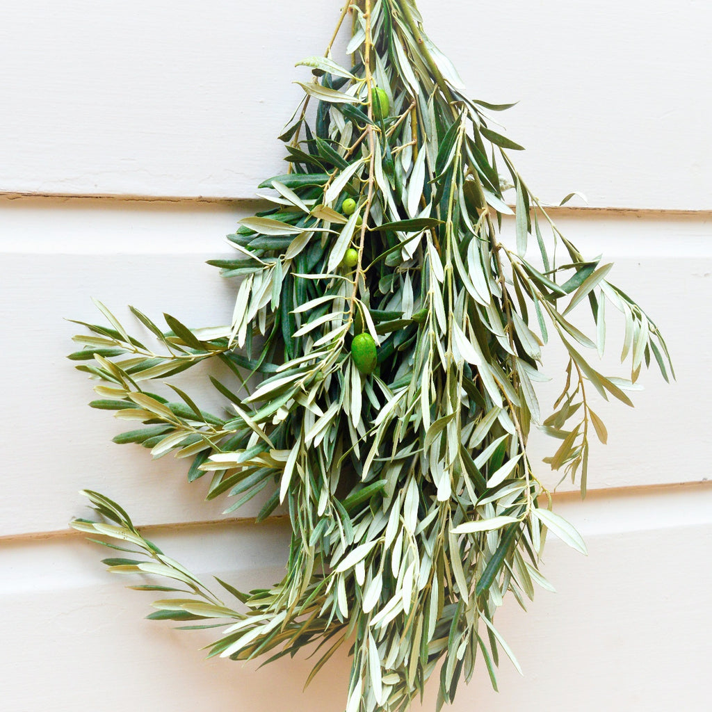Fresh Olive Bunch | Club Botanic | Bunches of Olive | Olive Fresh | Olive Branches | Branches of Olive