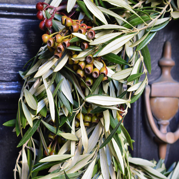 California Olive and Eucalyptus Pod Wreath | Club Botanic | Fresh Olive Wreath for Fall | Eucalyptus Nut Wreath | Eucalyptus Pod Wreath | Fresh Wreath for Fall  | Fresh Wreath for Autumn