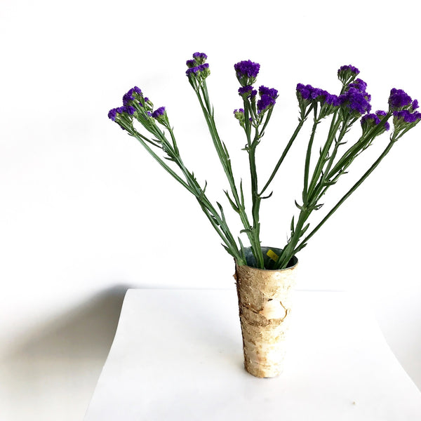 Purple Statice Bunch | Club Botanic | Violet Statice Bunch | Bunch of Statice | Bunch of Purple Statice | Bunch of Violet Statice | Statice Stems | Purple Statice Stems | Violet Statice Stems