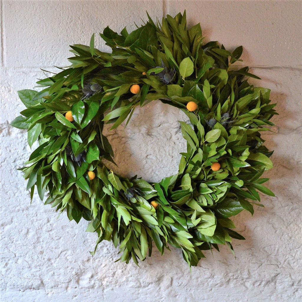 Blue Thistle Wreath | Laurel Bay Wreath | Bay Laurel Wreath | Fresh Bay Wreath | Blue Thistle Wreath | California Bay Leaves in a wreath