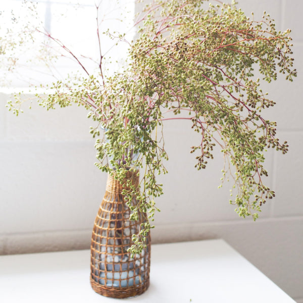 Stripped Eucalyptus Bunch | Naked Eucalyptus Bunch | Stripped Eucalyptus Branches | Stripped Eucalyptus Stems in Glass Vase | Stripped Euc | Fresh Bunches
