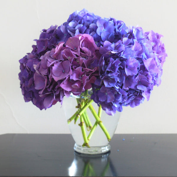 Blue Hydrangeas | Violet Hydrangeas | Purple Hydrangeas | Flower Delivery SF | SF Florist