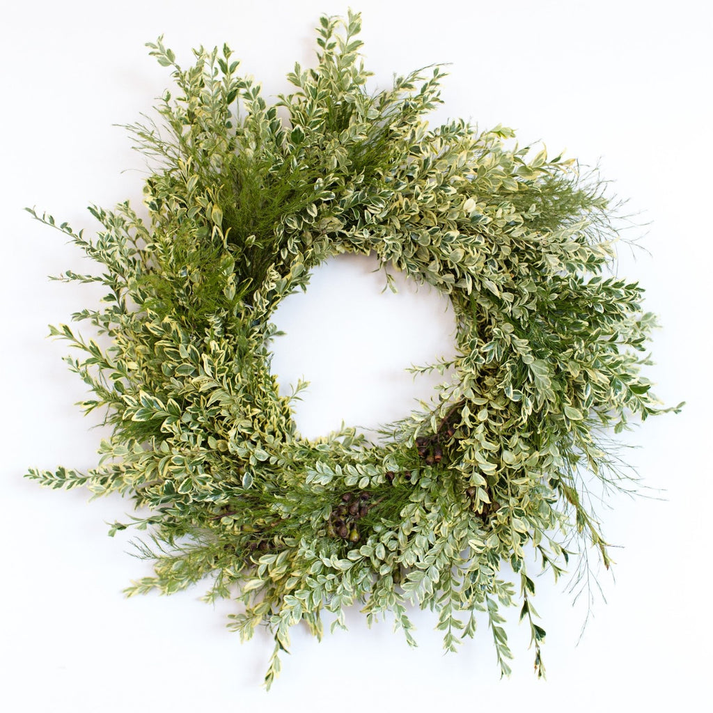 Half Moon Bay Villa Wreath | Club Botanic | English Boxwood Wreath for Christmas | Variegated Boxwood Wreath for Front Door | Variegated Boxwood and Tree Fern Wreath | Eucalyptus and Boxwood Wreath | Sympathy Wreath