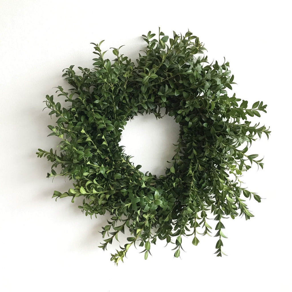 Fresh Boxwood Wreath | Club Botanic | German Boxwood Wreath | Green Boxwood Wreath | Boxwood Wreath for Front Door | Fresh Green Boxwood Wreath on white background