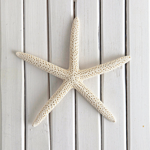 Decorative Starfish