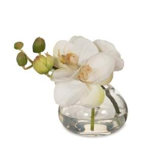 Orchid In Glass Vase - EX DISPLAY