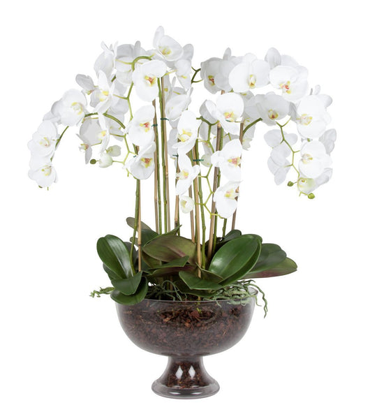 Extra Large Luxury Orchid In Glass Footed Bowl