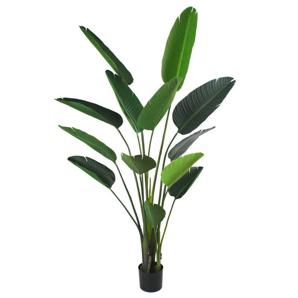 Luxury Traveller Palm Plant