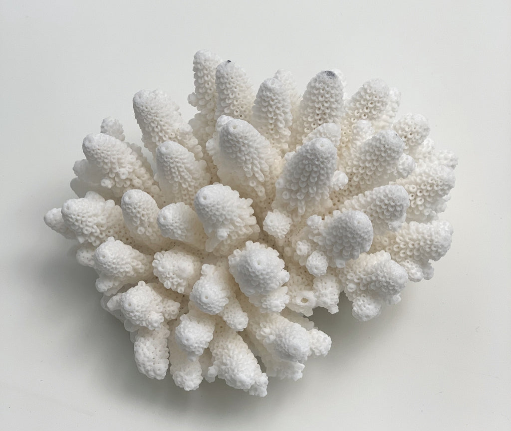 Mini Specialty Finger Coral