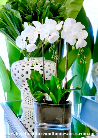 Medium White Orchid Set In Long Vase