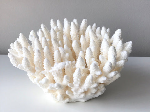 Medium Specialty Finger Coral