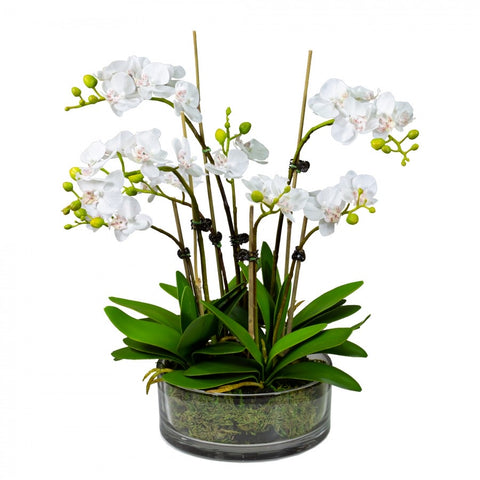 Medium White Orchid Set In Glass Bowl