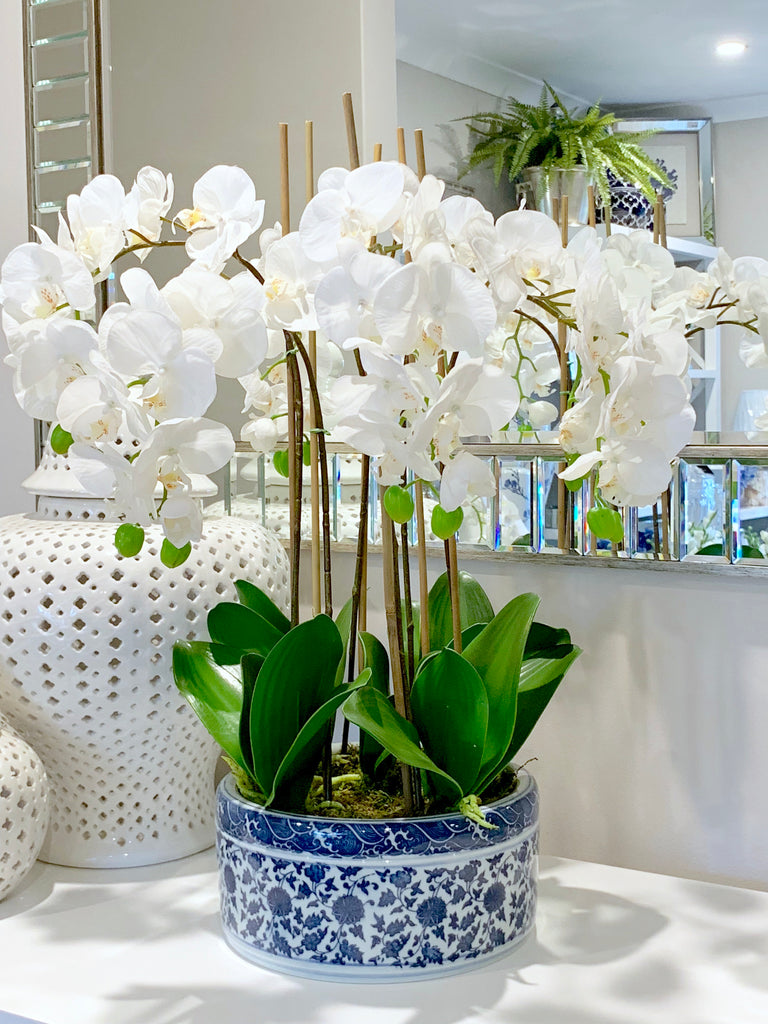 Luxury Orchid In Round Blue & White Pot
